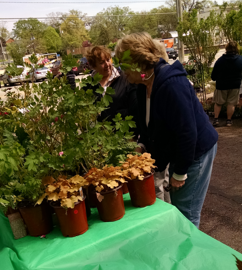 customers at plant sale 2016
