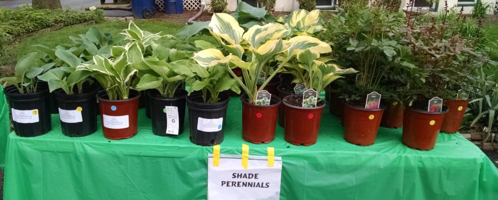 shade perennials 2016